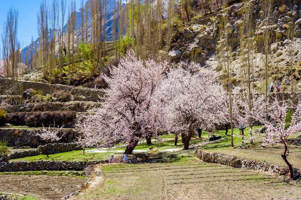 hunza valley blossom tour